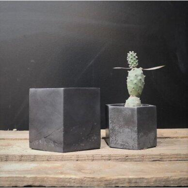Juodas betoninis šešiakampis vazonėlis