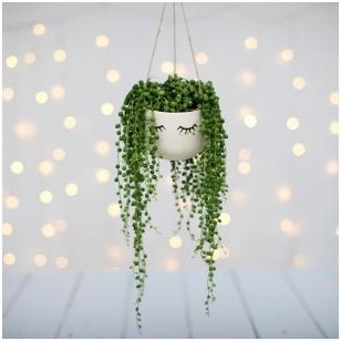 Eyes Shut hanging planter