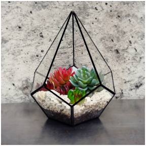 A drop-shaped geometric terrarium for plants