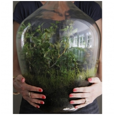 Ekosistema butelyje- akių džiaugsmas ir interjero puošmena