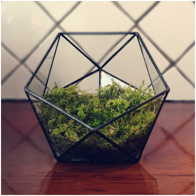 Stiklinis terariumas augalams 3