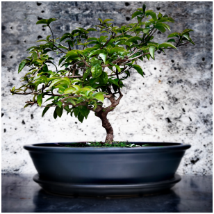Tamsiai pilkas keramikinis bonsai vazonėlis su lėkštute