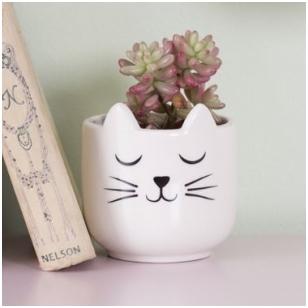 Vazonas katytė