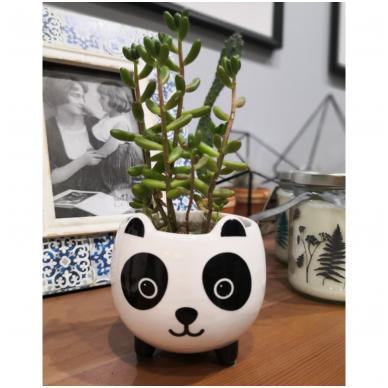 """Vazonas """"Panda"""" 2"""