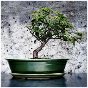 Žalias, keramikinis  bonsai vazonėlis su lėkštute